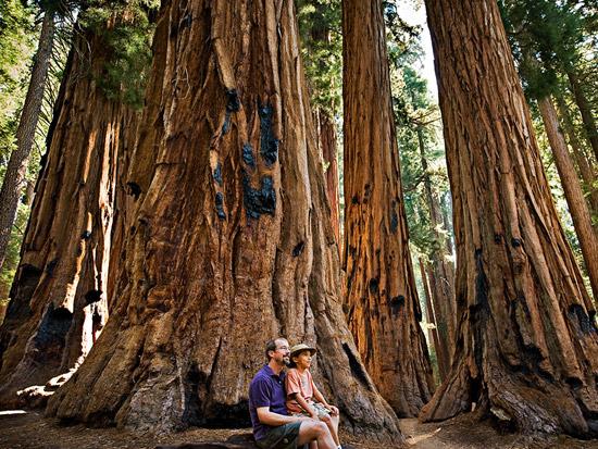 sequoia-fatherson
